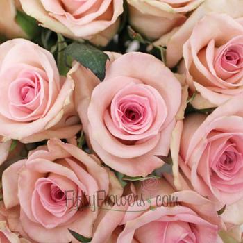 Sophie Light Pink Rose