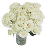 bulk cream spray roses
