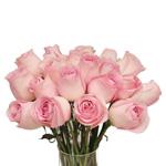Light Pink Rose Sweet Akito