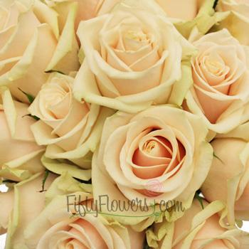 Creamy Peach Talea Sweetheart Rose