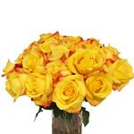 Yellow Rose Tressor 2000