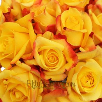 Tressor 2000 Yellow Rose