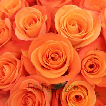 Tropical Amazon Orange Rose