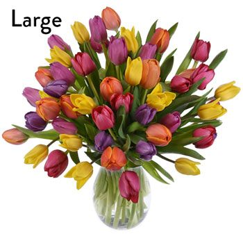 Assorted Tulip Gift Bouquet