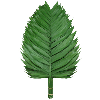 Emerald Palm Greens