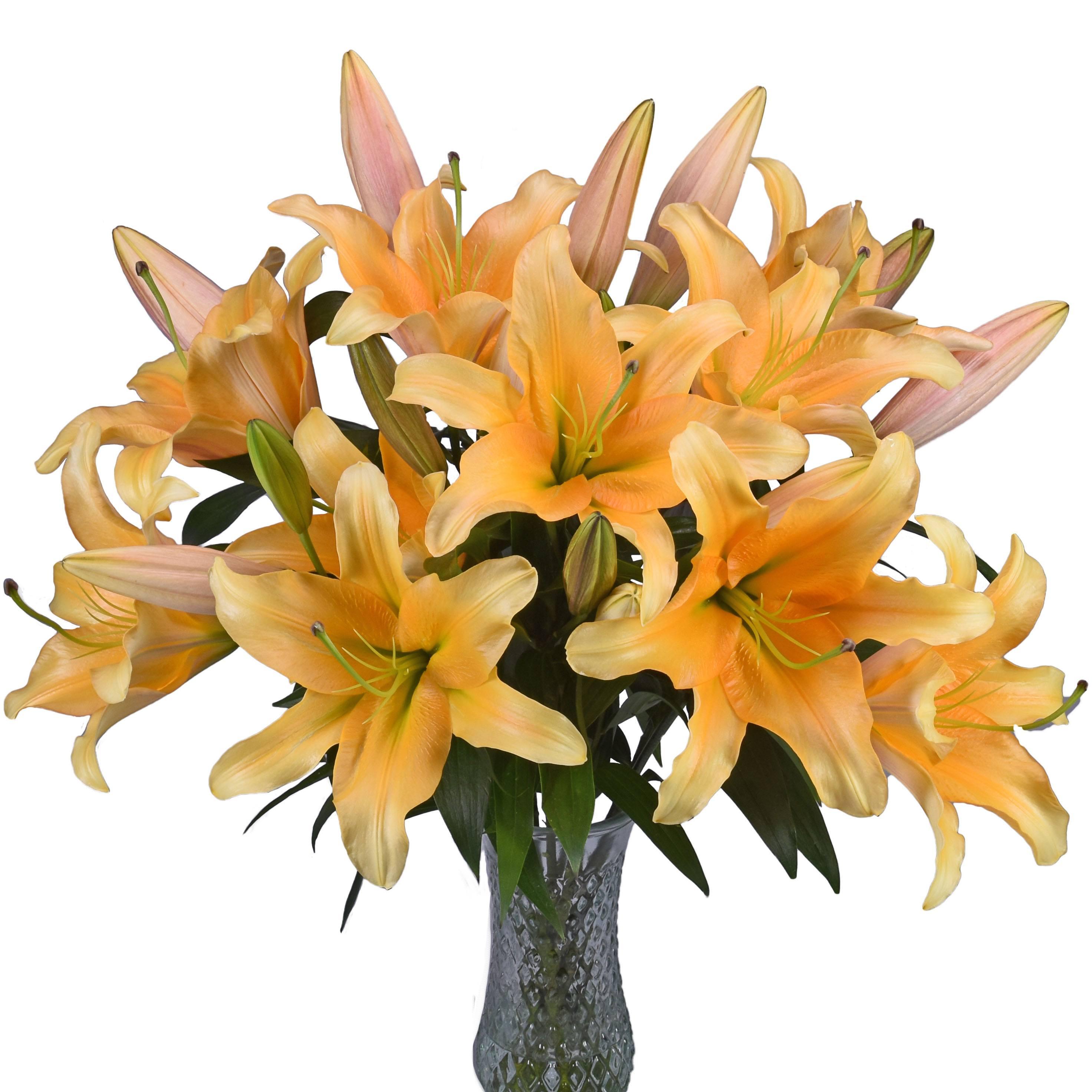 Golden Orange Hybrid Lily Flower