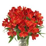 Bulk AlstromeriaPierott flower