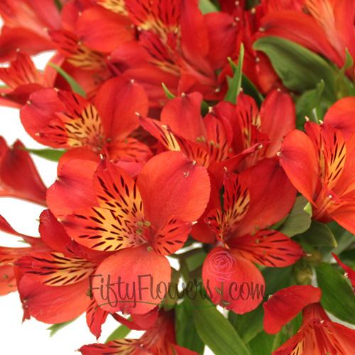 Red Bulk Alstroemeria Flowers