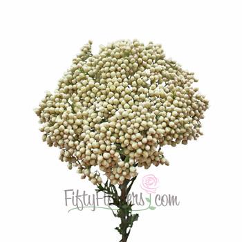 White Rice Flower