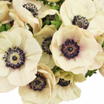 White Fresh Cut Anemones May to September Delivery