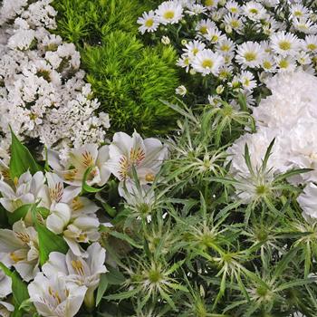 White Textured Filler Flower Pack