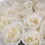White Tibet Rose