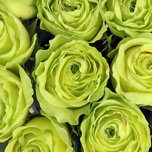 Pomelo Green Rose