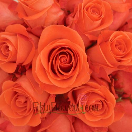 Wow Salmon Orange Bulk Rose