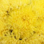 Yellow Bulk Football Mum