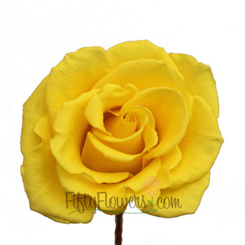 Yellow Coral Rose