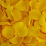 Buy Bulk Yellow Rose Petals