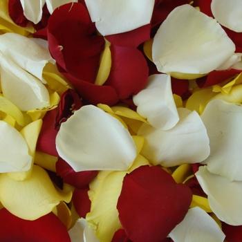 Yellow Redsicle Rose Petals