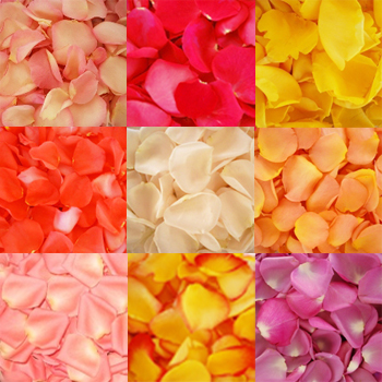 Choose Your Colors Rose Petals