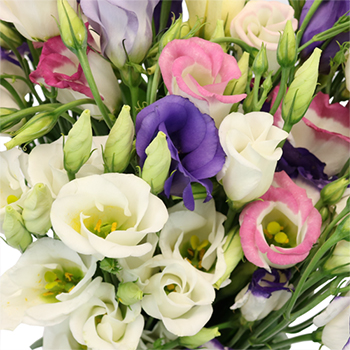 Assorted Single Lisianthus Flower for October to May Delivery