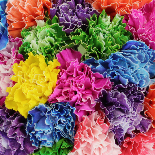 Assorted Dyed Wholesale Carnation Flowers
