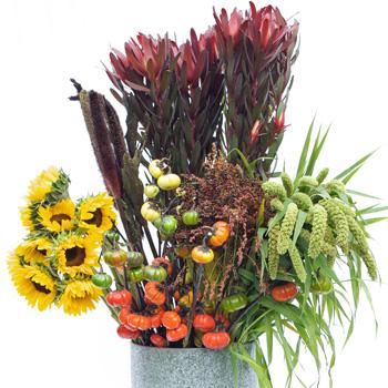 Autumn Sunflower Flower Mixed Pack