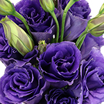 Hues of Purple Lisianthus Flower for June to September Delivery