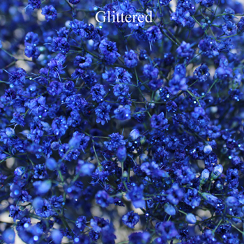 Royal Blue Enhanced Baby's Breath