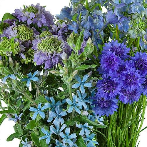 Blue Wildflower DIY Pack