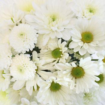 Faithful White DIY Flower Pack
