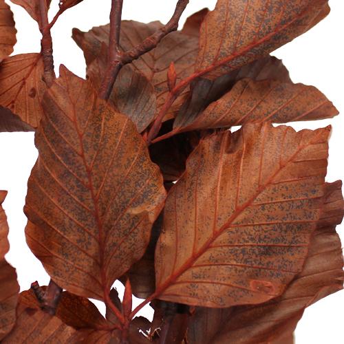 Copper Beech Bulk Branches