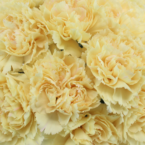 Champagne Wedding Carnation Flowers