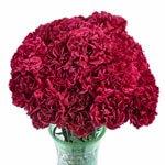 Red and White Bulk Carnations flower