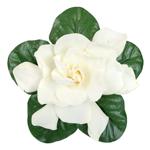 Wedding Gardenia Flower