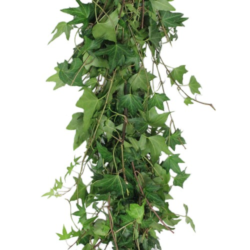 Green Ivy Budget Fresh Cut Garland