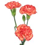 Bulk Orange Mini Carnation Flowers