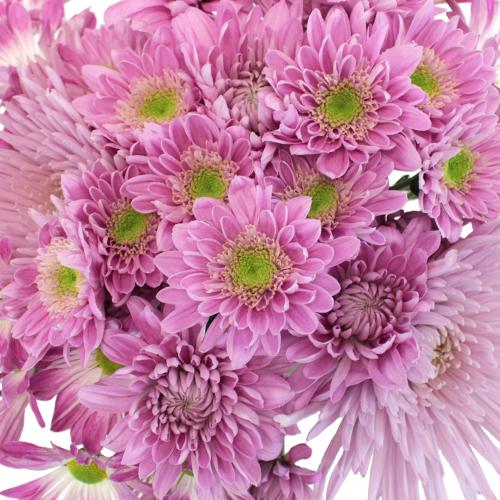 Sugar Plum Fairy Flower Pack
