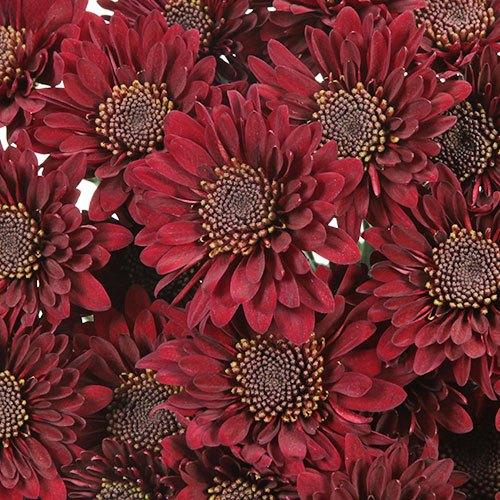 Fall Red Pom Flower