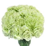 Green Bulk Carnations flower