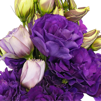 Hues of Purple Designer Lisianthus Flower for October to May Delivery