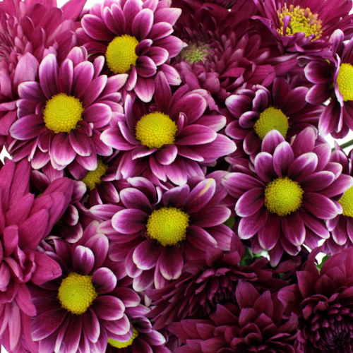 Berry Bombastic Wedding Flower Pack