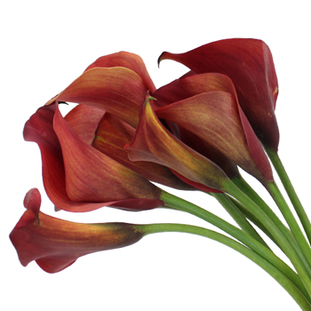 Rustic Red Mini Calla Lily Flower