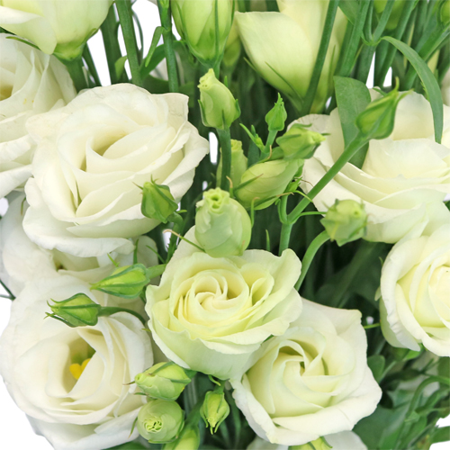 White Mini Lisianthus Flower for June to September Delivery