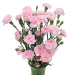 Bulk Pink Mini Carnation Flowers