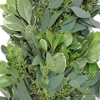 Seeded Eucalyptus and Variegated Pittosporum Fresh Garland