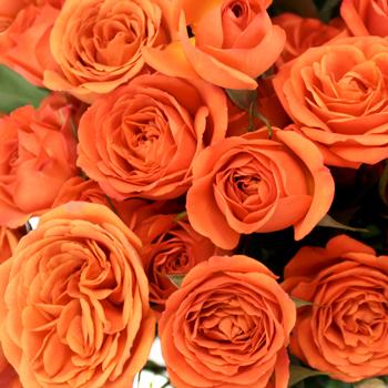 Dark Orange Spray Bulk Roses