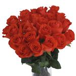Orange Rose Star 2000