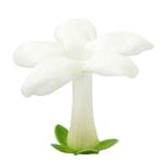 White Stephanotis Bulk Flower