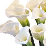 Fresh Flower Gift Calla Lilies Valentine's Day
