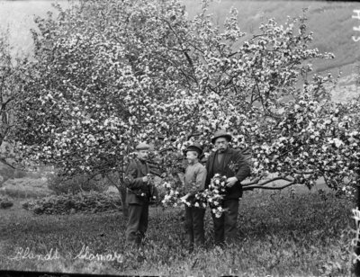 trees, orchard, fruit, boy, men, buds, picking, moustache, vintage,